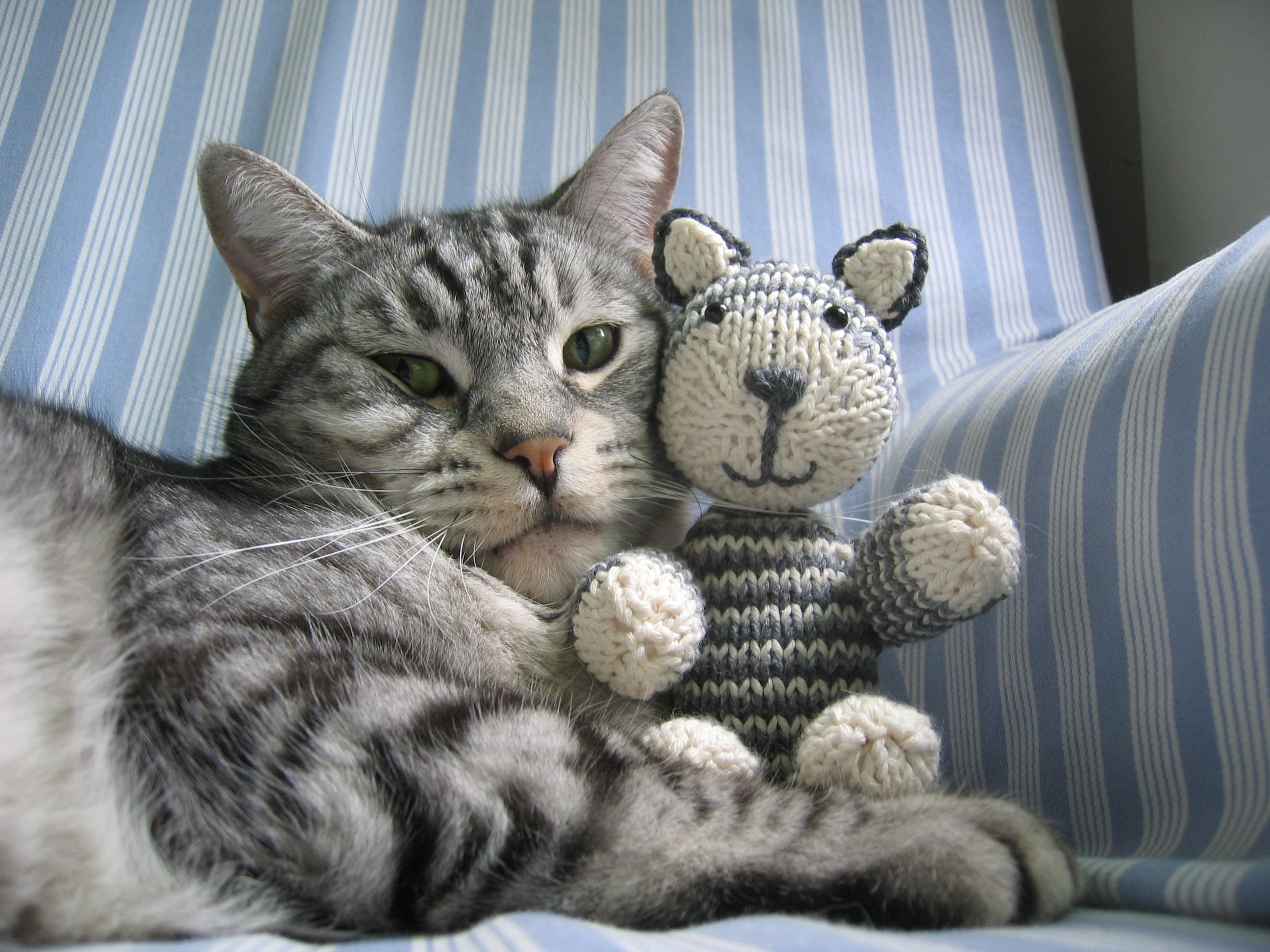 Knitting Kitten : I can has job writing about cats make and do with perri