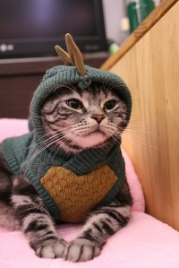 A cat wearing an awful knitted outfit