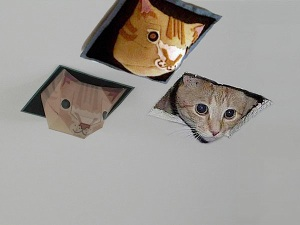 crafted ceiling cats
