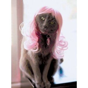A grey cat in a pink wig