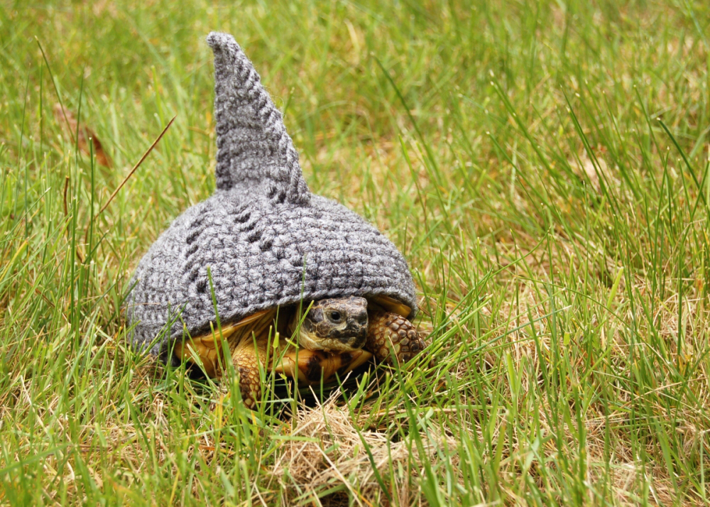 Knitting Pattern For Tortoise Jumper : Is it a shark? Is it a tortoise wearing a knitted fin? Make and do with Perri